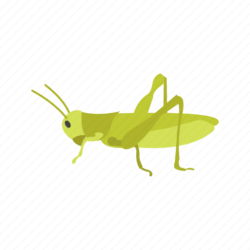 animal, bug, grasshopper, green, insect, spring icon