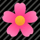 blossom, botany, flower, garden, plant, spring