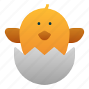 animal, chick, egg, farm, spring