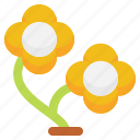 flowers, flower, nature, plant