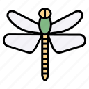 dragonfly, insect, bug, nature, animals, spring, fly