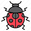 ladybug, insect, bug, beetle, fly, spring, animals