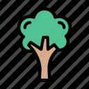 tree, nature, park, spring, garden