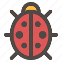 bug, insect, lady bird, ladybug, spring time, summer
