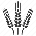 agriculture, cultivation, planting, rice, spring, barley, farm icon