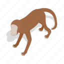 animal, asia, isometric, mammal, monkey, primate, wildlife icon