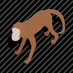 animal, asia, isometric, mammal, monkey, primate, wildlife icon
