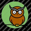 animal, evil, halloween, owl, witch