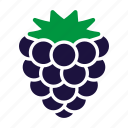 blackberry, food, fruit, sticker icon