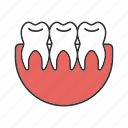 dentition, healthy, oral cavity, stomatology, teeth, teething, tooth icon