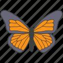 creature, bird, moth, nature, butterfly