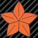 badian, illicium verum, seed, spice, star anise