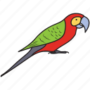 bird, colorful bird, flying bird, macaw, parrot, pet bird
