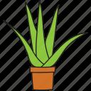 aloe vera, botanical, cactus, succulent, wild plant