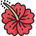 hibiscus, flower, tropical, bloom, floral, petal
