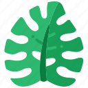 monstera, leaf, tropical, plant, leaves, nature