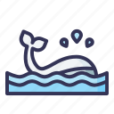 whale, animal, mammal, animals