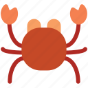 crab, food, sea food, seafood icon