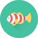 animal, fish, goldfish, mammal, seafood icon