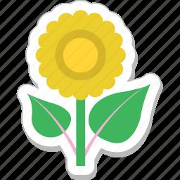 bloom, blossom, daisy, flower, sunflower icon
