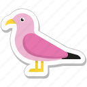 animal, bird, dove, pigeon, sparrow icon