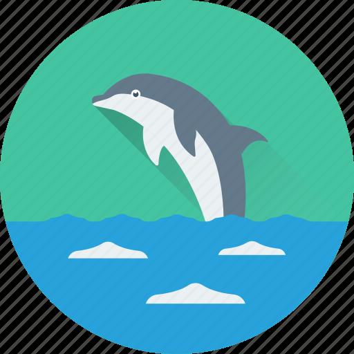 animal, dolphin, fish, mammal, sea life icon