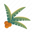 beach, coconut, leaf, leaves, palm, summer, tropical