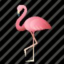 animal, flamingo, pink, sea, summer, tropical