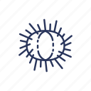 animal, beach, ocean, sea urchin icon