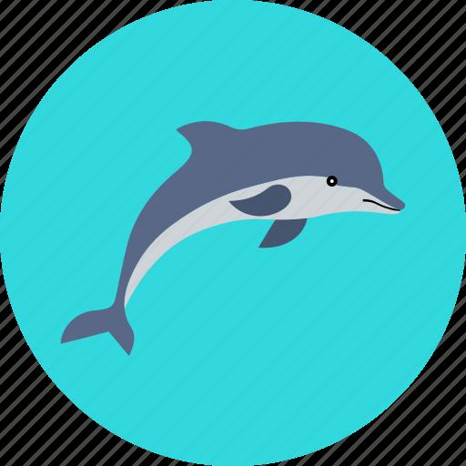animal, dolphin, fish, marine, sea, summer, vacation icon