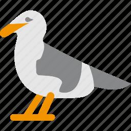 animal, beach, bird, nature, seagull icon