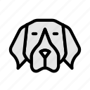 dog, animal, switzerland, pet, puppy