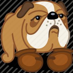 animal, box, bulldog, dog, fight, pet, sport icon