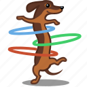 cardio, dog, fitness, hula hoop, pet, sport icon