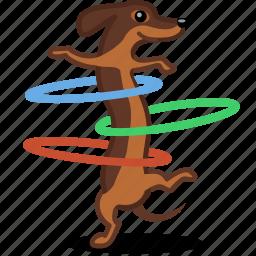 cardio, dog, fitness, hula hoop, pet, sport icon