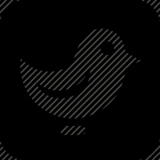 bird, chat, communication icon