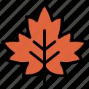 autumn, decoration, fall, leaf, maple, nature