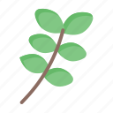 green, leaf, nature, thanksgiving, weat