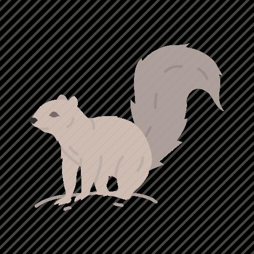 black squirrel, chipmunk, mammal, squirrel icon