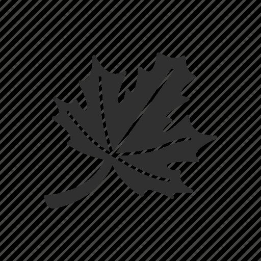 fall, fall leaves, leaf, maple leaf icon