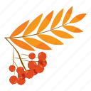 ashberry, berry, branch, bunch, cartoon, ripe, rowanberry branch icon