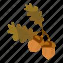 acorn, autumn, branch, brown, cartoon, harvest, harvesting