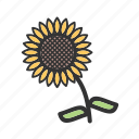 autumn, decoration, fall, seasonal, sunflower, thanksgiving, yellow icon