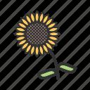 autumn, decoration, fall, seasonal, sunflower, thanksgiving, yellow