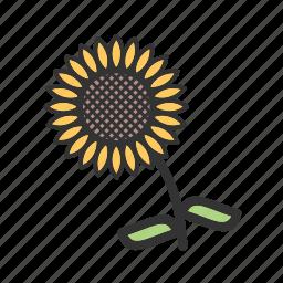 autumn, decoration, fall, seasonal, sunflower, thanksgiving, yellow icon