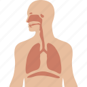 apparatus, human, lungs, respiration, respiratory, system, ventilatory icon