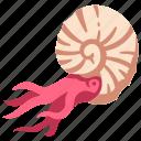 ammonite, ancient, animal, dinosaur, fossil, jurassic, shell icon