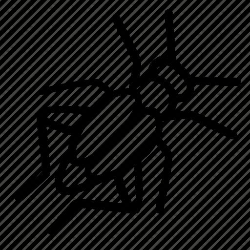 cricket, hobby, insect, pet, terrarium icon