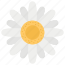 fragrance, jasmine, jasmine flower, morning glory, poppy flower, spa essentials icon