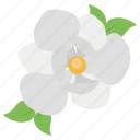 blossom, botany, floral, magnolia, mississippi state, spa essential icon